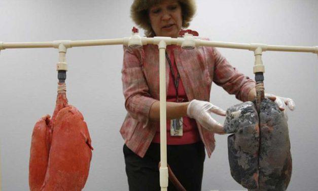 Welches Volumen hat die Menschliche Lunge