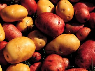 Verschiedene Kartoffelarten