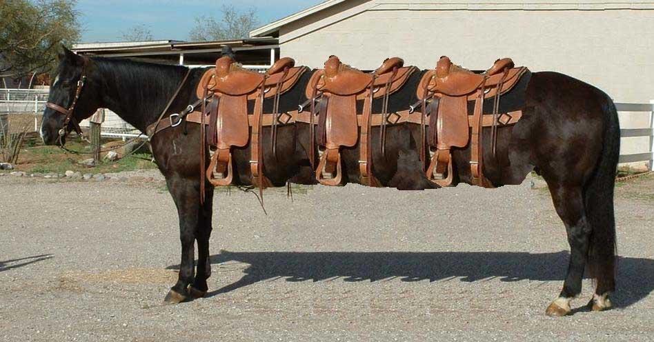 Pferde Limousine