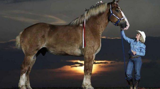 Remmington - Das größte Pferd der Welt