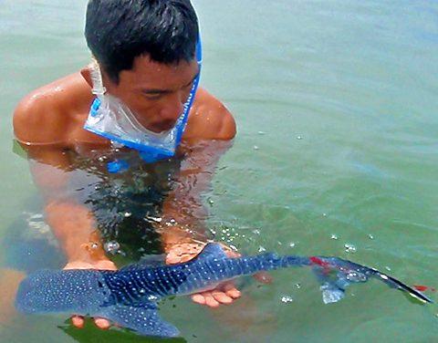 Der Größte Fisch der Welt