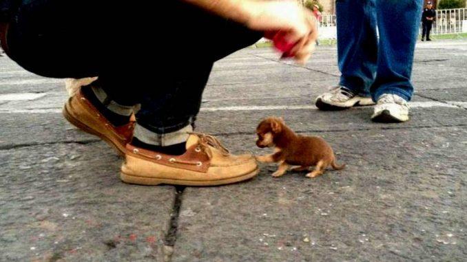 Der Kleinste Hund