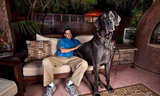 Der schwerste Hund der Welt