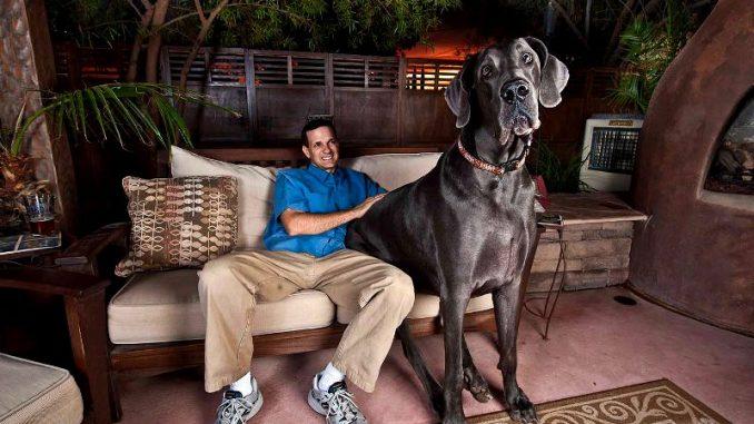 Giant George - der größte Hund der Welt