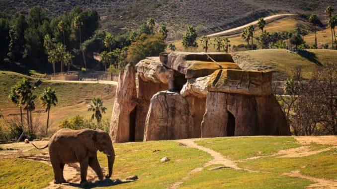 Elefant im größten Zoo der Welt