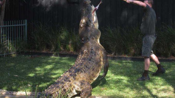 Das größte Krokodil