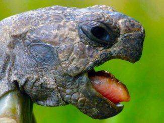 Alter von Schildkröten