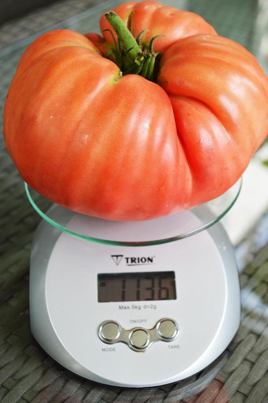 1 Kilo Tomate