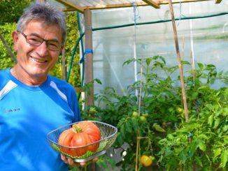 die wohl größte Tomate Europas