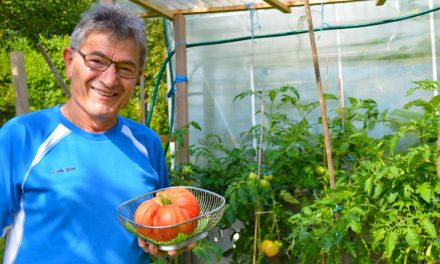 Die größte Tomate Europas