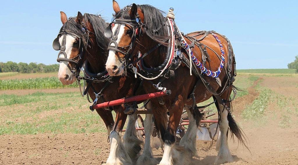 Die teuerste Pferderasse