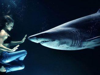 Beißkraft - Weiße Hai