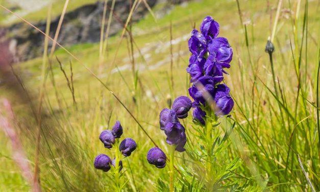Die Giftigste Pflanze der Welt