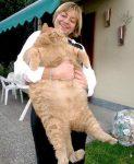 Die Größte Katze
